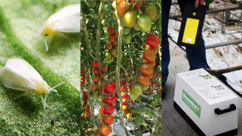 Scoutbox: digital monitoring tool for white fly in tomato