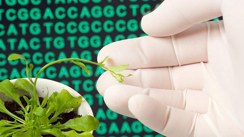 Transcriptome-based technologies for plant biotechnology