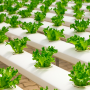 Gaia Growth: Cloud software to control and monitor agricultural environments.