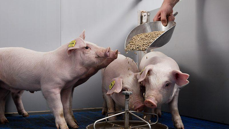 Milkiwean® feed products for total piglet performance